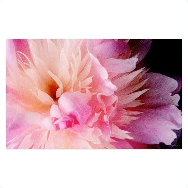 Peony: Pink Perfection by Deva Padma
